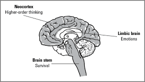 brain image for JKP book